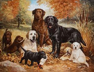 Koperstapeling bij honden